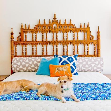 dogs-on-bed-with-orange-headboard
